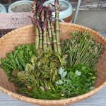 山菜の保存方法とおいしく食べるための下処理方法!