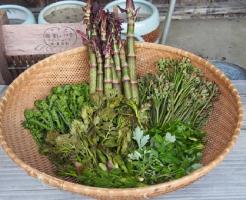 山菜 保存 方法