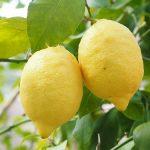 レモンの保存方法について