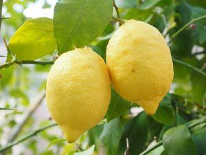 レモン 保存 方法