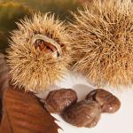 皮付きの栗とむき栗の保存方法と栄養について