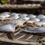 魚の干物についての保存方法とは?