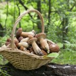 松茸の便利な保存方法と保存期限は?