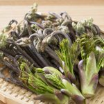 たらの芽の便利な保存方法と保存期限は?
