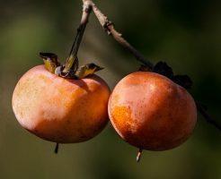 干し柿 保存 方法